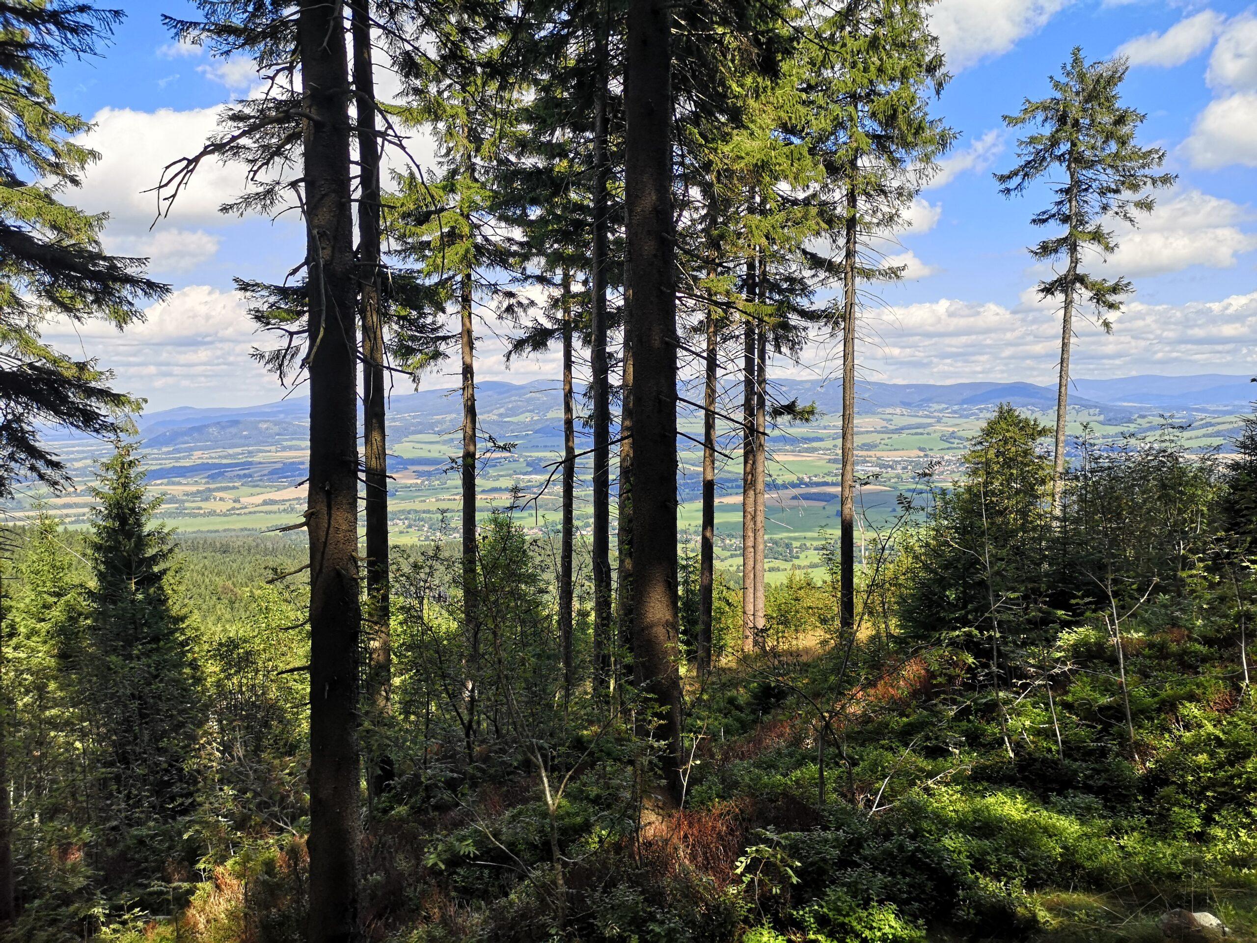 Milióny stromů nepomohou. Bez změny energetického mixu Česko s emisemi nehne